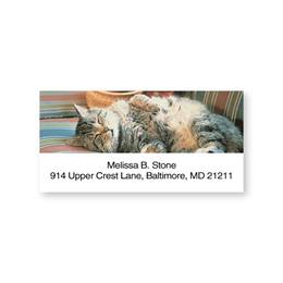 Cat Nap on the Couch Sheeted Address Labels