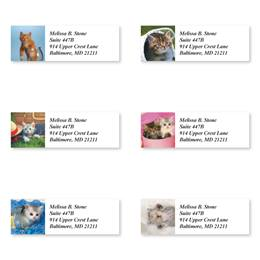 Kitty Capers Assorted Sheeted Address Labels
