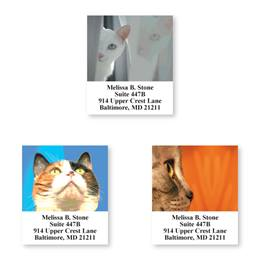 Feline Faces Assorted Sheeted Address Labels
