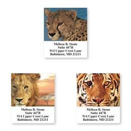 Big Cats Assorted Sheeted Address Labels