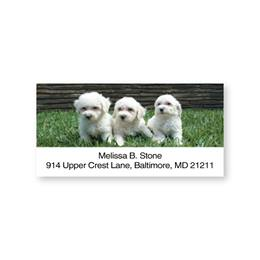 Bichon Puppies Trio Sheeted Address Labels