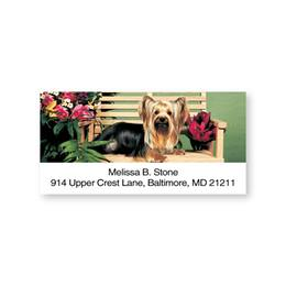 Cutie Yorkie on a Bench Sheeted Address Labels